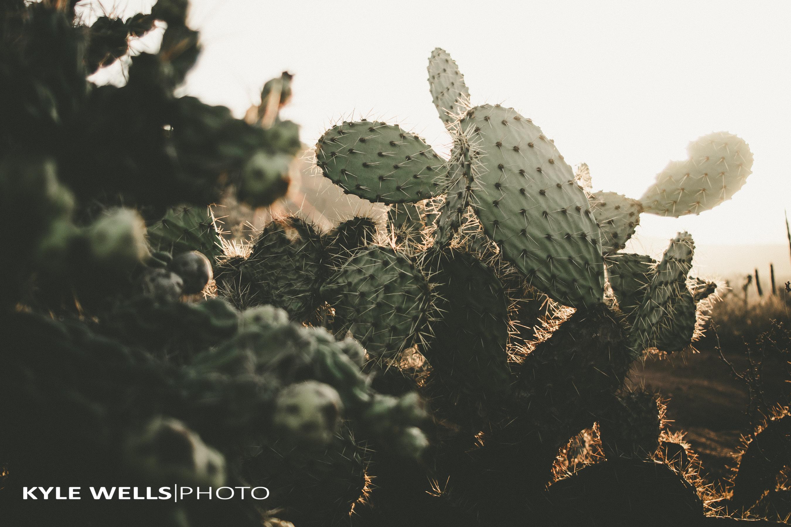 KWPhoto-28